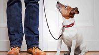 قانون درباره نگهداری از حیوانات در آپارتمان چه میگوید؟