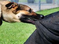 حمله سگهای ولگرد به کودک خلخالی