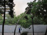 وزش باد شدید و پیشبینی شرایط طوفانی در تهران