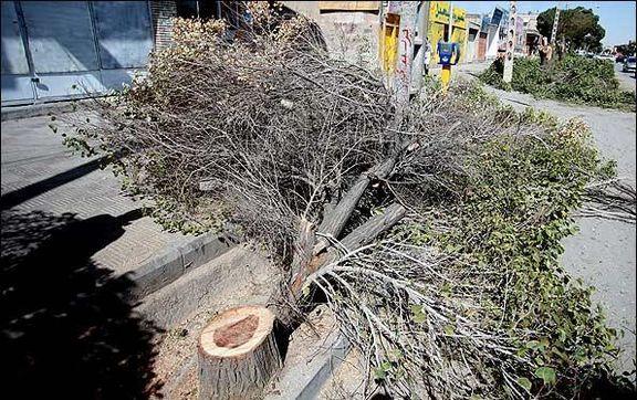 وقوع ٢٠حادثه مرتبط با طوفان در تهران