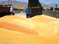 ایران سال آینده 16.8میلیون تن گندم تولید میکند