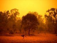 ادامه آتش سوزی علفزارها در استرالیا +فیلم