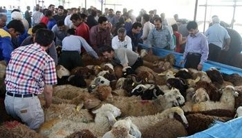لیست مراکز عرضه دام زنده بهداشتی ویژه عید قربان