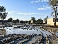 خسارت سیل به بخش کشاورزی سیستان و بلوچستان جدی است