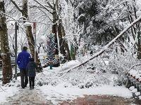 خسارات چند میلیاردی شکستن درختان در شهرها/ پیشنهاد یک فعال محیط زیست به شهردار: پیمانکاران خاطی را تعقیب کنید