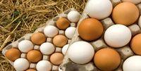 چرا تخممرغ گران شد؟