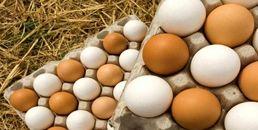 6 فایده شگفت انگیز مصرف تخم مرغ