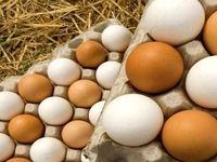صادرات تخم مرغ غیرخوراکی ممنوع و روغن حیوانی مجاز شد