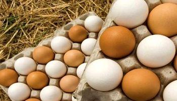 11 درصد؛ کاهش قیمت تخم مرغ