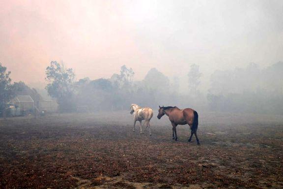 جدال باران و آتش در جنگلهای استرالیا