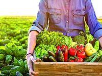 حذف دلالان کشاورزی با فروشگاه مجازی