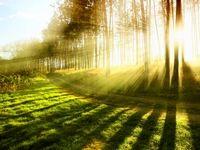 ۱۲ اثر خورشید بر سلامت، خوب و بد!