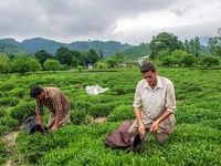 هشدار نخبگان کشاورز درباره انحراف اعتبار ۱.۵ میلیارد دلاری اشتغال روستایی