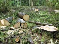 جنگل خواری شمال متوقف نمیشود؟