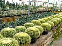 اعلام شرایط جدید صادرات گل/ ۲۹گل و گیاه زینتی نیاز به اخذ مجوز صادرات ندارند