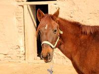 پرورش اسب در دل روستایی کوچک +تصاویر