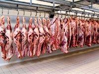 عامل گرانی ۳۰درصدی گوشت در بازار کیست ؟