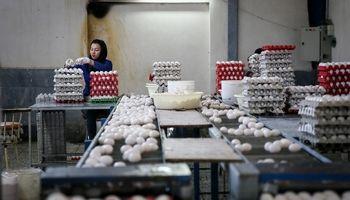 افزایش قیمت تخم مرغ به 7800تومان درب مرغداریها/ قیمت منطقی چقدر است؟