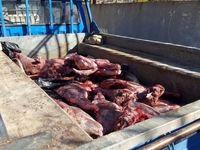 شکارچیان غیرمجاز گراز در خرم آباد دستگیر شدند