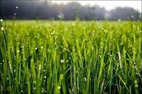 کمک صندوق توسعه ملی به آب و کشاورزی