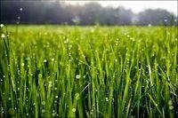 توصیههای هواشناسی کشاورزی برای هفته دوم زمستان
