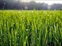 افت تراز تجاری در بخش کشاورزی