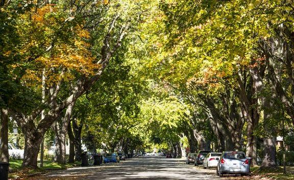 فواید شگفتانگیز زندگی در کنار درختان برای سلامتی