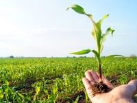 تدوین برنامه ۱۰ساله برای افزایش بهرهوری آب/ رشد ۵میلیارد دلاری صادرات محصولات کشاورزی