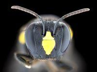 زنبور را تا این اندازه نزدیک دیدهاید؟ +تصاویر