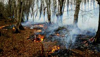 کاهش ۱۳۰درصدی آتشسوزی در جنگلهای کشور