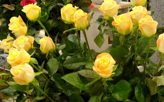 با بوییدن این گلها بیماری خود را درمان کنید +عکس