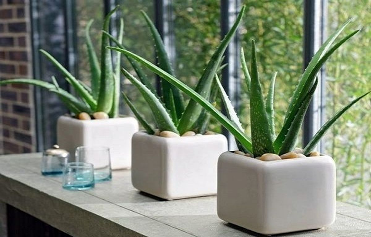 چه گیاهانی را در اتاق خواب بگذاریم؟