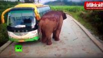 حمله فیل به وسایل نقلیه در استان یوننان
