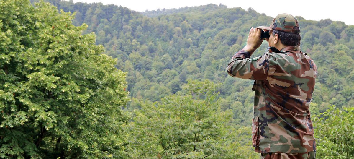 کاهش هزینه قطع درختان جنگلی!