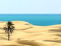 خاصترین ساحل ایران +تصاویر