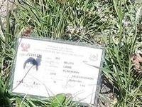 کشف جسد یک تبعه کشور پرو در ارتفاعات دماوند +عکس