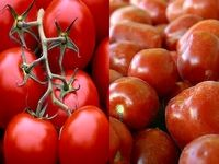 وزارت کشاورزی موضوع تعیین قیمت فروش گوجه فرنگی را پیگیری کند