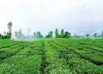 عرضه سامانهای برای اصلاح آبیاری سنتی در بخش کشاورزی