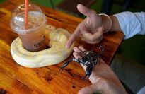 نوشیدن قهوه با مار و عقرب و ایگوانا! +تصاویر