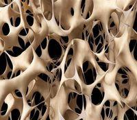 هورمون اوکسی توسین از پوکی استخوان در زنان پیشگیری میکند