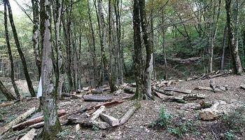 تلاش اوقاف برای بهرهبرداری از جنگلهای شمال