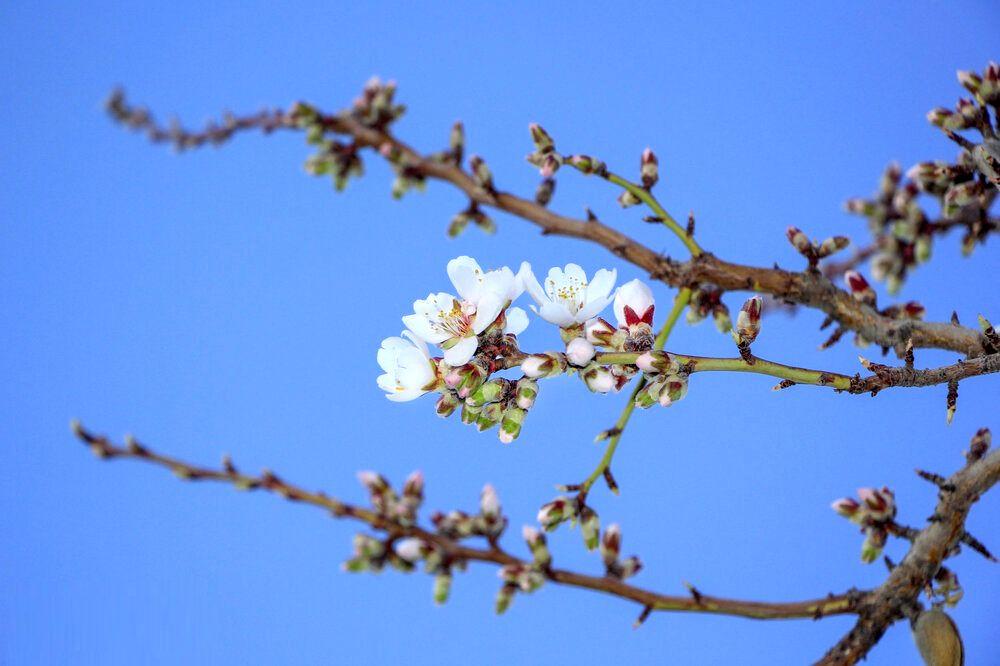 بهار بختیاری