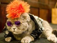 برگزاری شوی لباس گربهها در نیویورک +فیلم