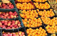 ۴۰هزار تن پرتقال ویژه شب عید ذخیرهسازی شد