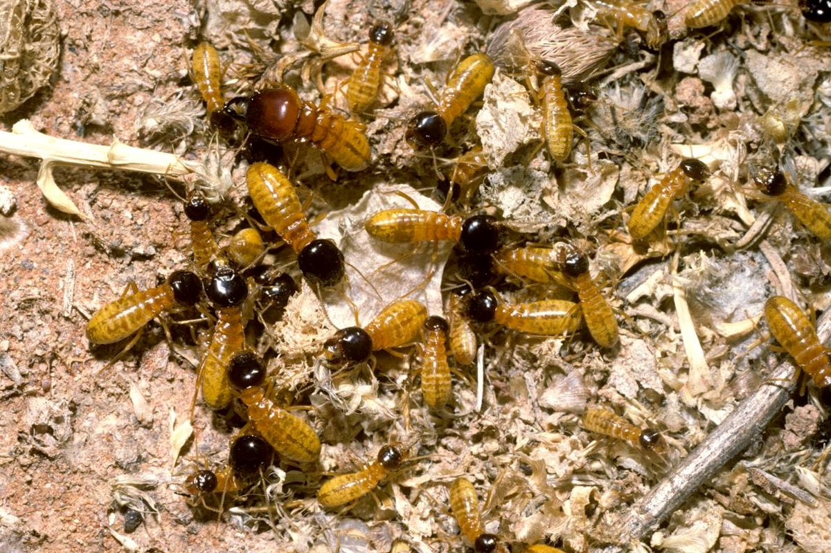 با حشراتی که وارد خانهمان میشوند، چه کنیم؟