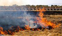 آتش در دامان زایندهرود +عکس