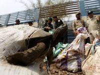 روشهای عجیب و غریب قاچاق حیوانات +تصاویر
