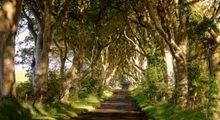 تونلی از جنس درخت در ایرلند +تصاویر