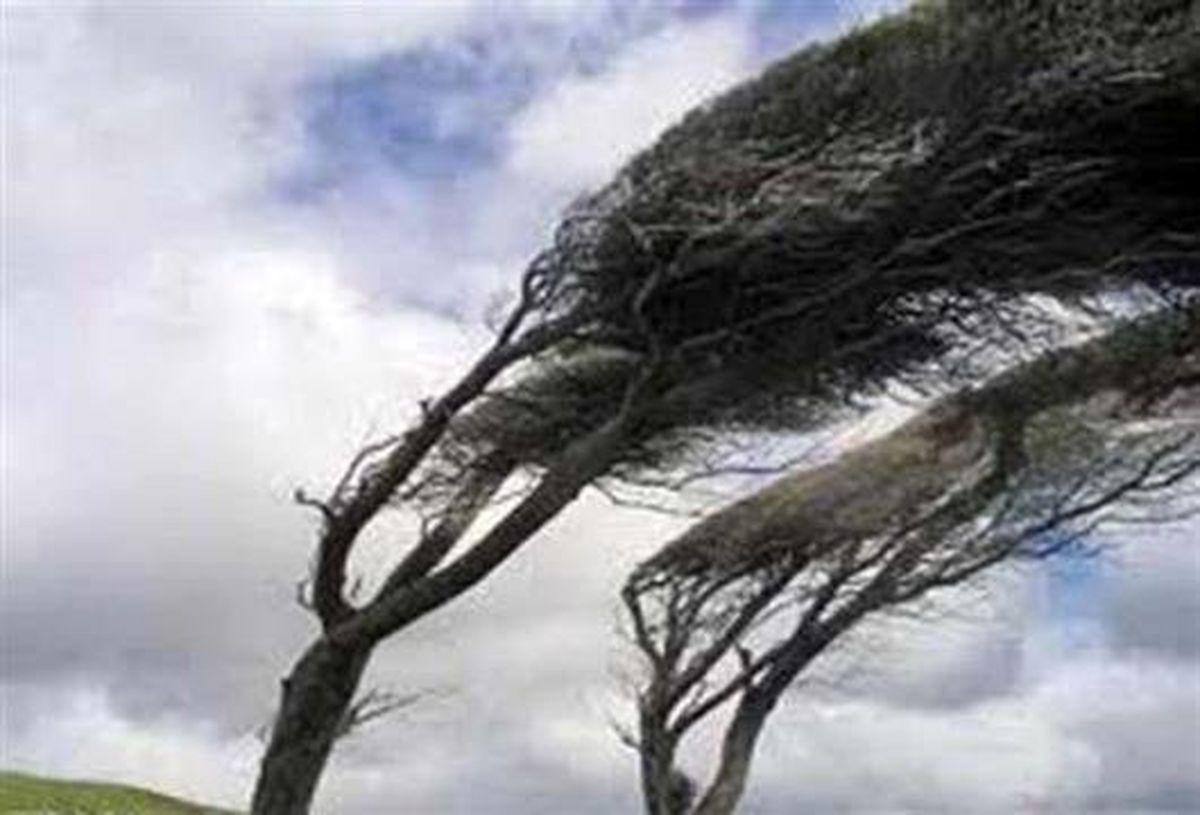 تند باد سبب سقوط ۱۵ اصله درخت در کرج شد