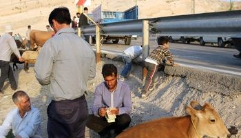 بازار فروش دام تبریز در آستانه عید قربان +تصاویر